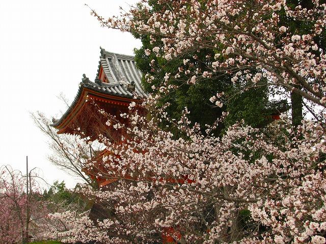 ◆◇桜の古都巡り◇◆京都観光旅行記